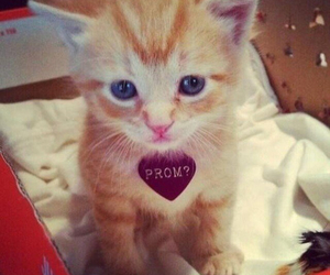 kitty, cute, and Prom image