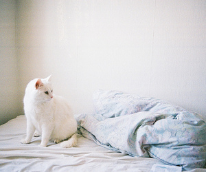 cat, white, and bed image
