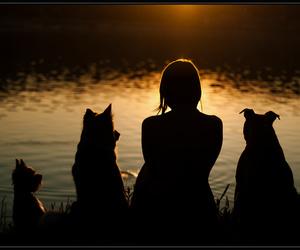 dark, dog, and dogs image