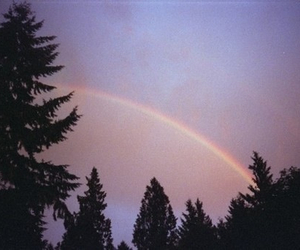 rainbow, tree, and sky image
