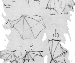 bats, wing, and bat wings image