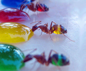 ant, color, and colors image