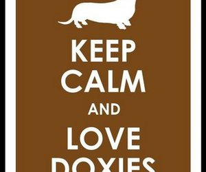 dachshund, keep calm, and doxie image