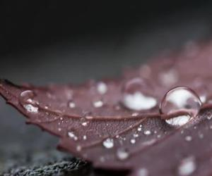 drops, leaf, and water image