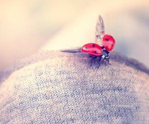 cute, beautiful, and ladybird image