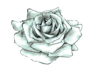 drawing, flower, and rose image