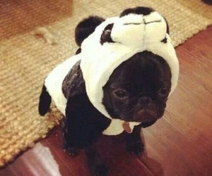 dog, cute, and panda image