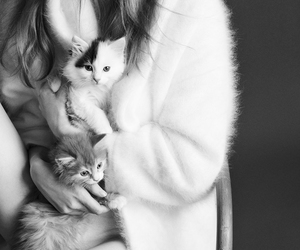 black and white, kittens, and photography image