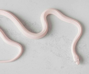 snake, pink, and pale image