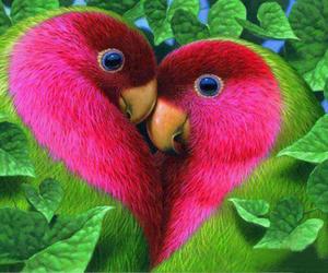 love, bird, and heart image
