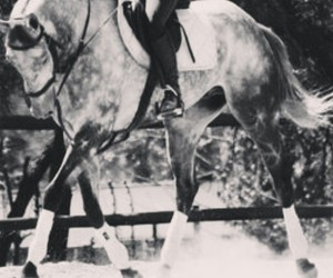horse, jumping, and thoroughbred image