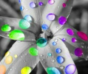 coloured, water drops, and amanzig image