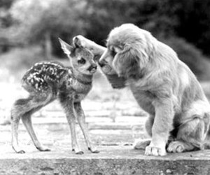 animals, dog, and tender moment image