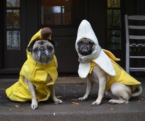 banana, bananas, and costume image