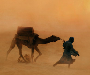 desert, camel, and sand image