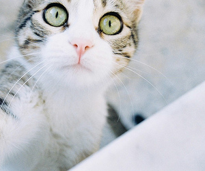 cat, green eyes, and cute image