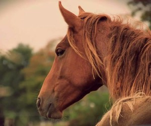 grunge, horse, and pale image