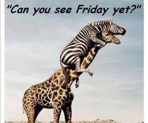 funny, animal, and friday image