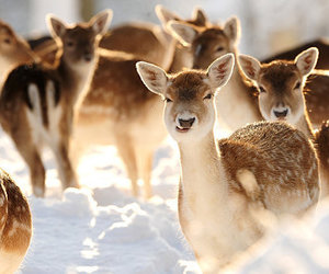 deer, fuzzy, and snow image