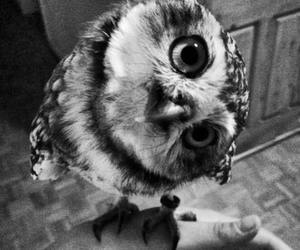cute, owl, and black and white image