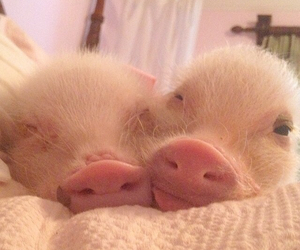piggies, pink, and smile image