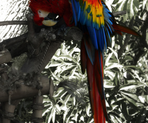 parrot and zoo image