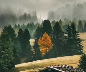 autumn, fields, and woods image