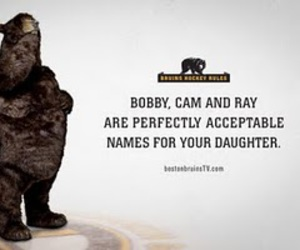 boston, bruins, and the bear image