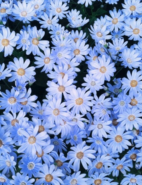 Daisy Background Shared By Krithika18 On We Heart It