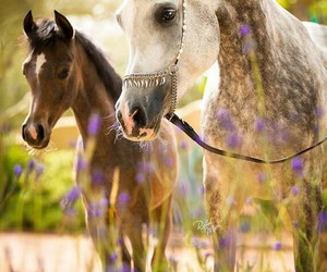 horse, animals, and flowers image