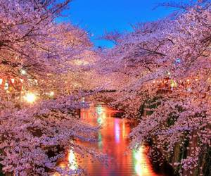 pink, light, and blossom image