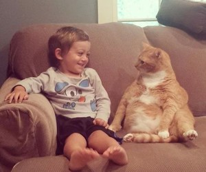cat, cute, and fat image