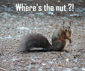 animal, fun, and squirrel image