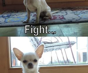animal, fight, and fun dog image