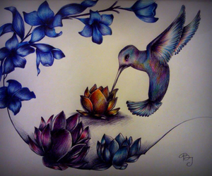 art, drawing, and hummingbird image
