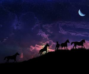 animals, horses, and moon image