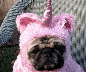 unicorn, dog, and pink image