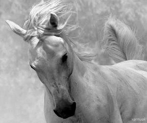 animal, varnuak, and beautiful image