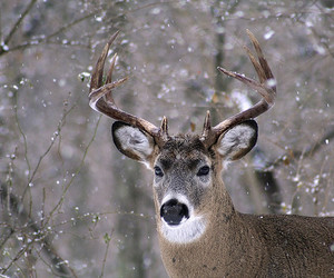animals, antlers, and closeup image