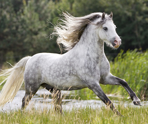 beautiful, free, and horse image