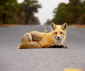 animal, road, and boost image