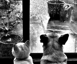 cat, dog, and rain image