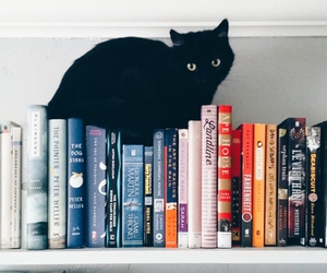 book, cat, and black image