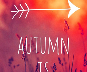 autumn, coming, and fall image