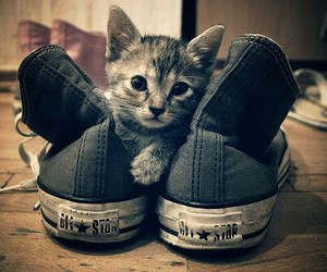 cat, cute, and converse image