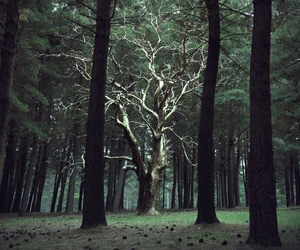 forest, tree, and fairy image