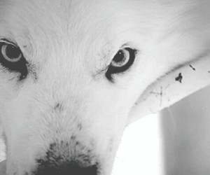 wolf, eyes, and gif image