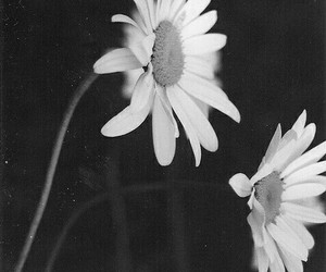 Darkness, flowers, and grunge image
