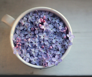 flowers, photography, and purple image