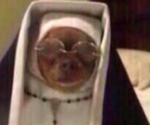 dog, funny, and nun image